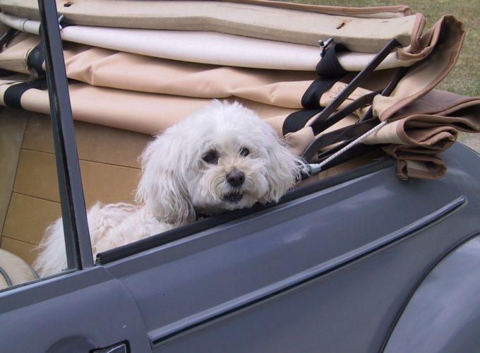 Cestovaní se psem