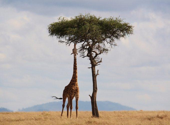 Zajímavá fakta o Africe, která vás překvapí