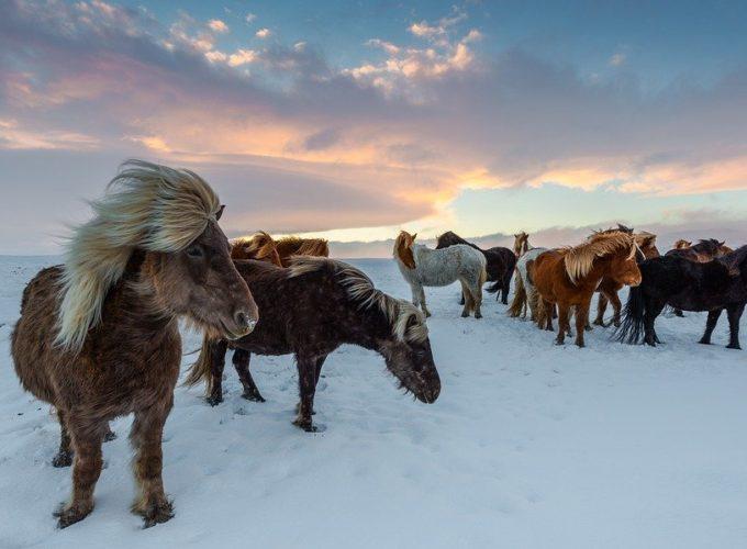 Zajímavosti o Islandu aneb vzhůru na Island